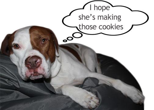 easy dog cookies